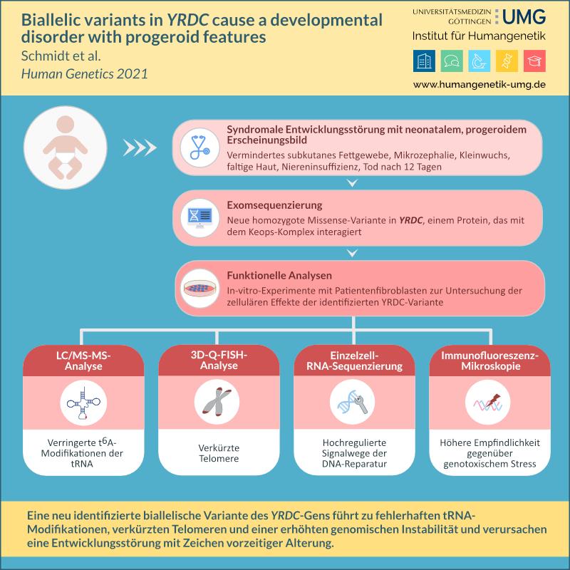 Neu identifizierte biallelische Variante in YRDC verursacht Entwicklungsstörung mit Zeichen vorzeitiger Alterung